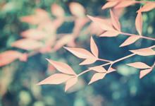 2020中共廉江市直属机关工作委员会招聘政府雇员1人公告(广东)