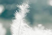 """2020内蒙古兴和县农技推广项目""""特聘农技员""""招聘5人公告"""
