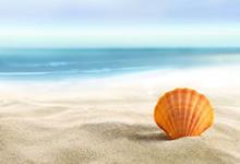 2021上海对外经贸大学财务处会计招聘1人公告